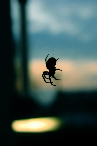 Spider iPod Touch Wallpaper