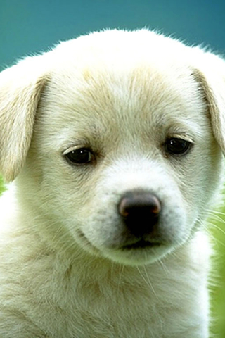 Cute Puppy iPod Touch Wallpaper