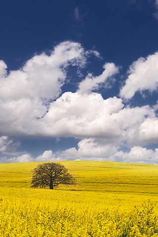 Lone Tree iPod Touch Wallpaper