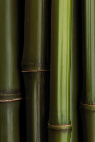 Bamboo iPod Touch Wallpaper