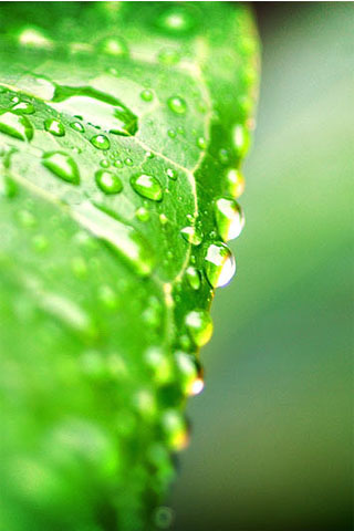 Water Leaf iPod Touch Wallpaper