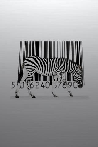 Zebra iPod Touch Wallpaper