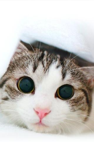 Kitten iPod Touch Wallpaper