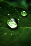 Water Droplets iPod Touch Wallpaper