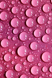 Pink Drops iPod Touch Wallpaper