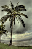 Palm Tree iPod Touch Wallpaper
