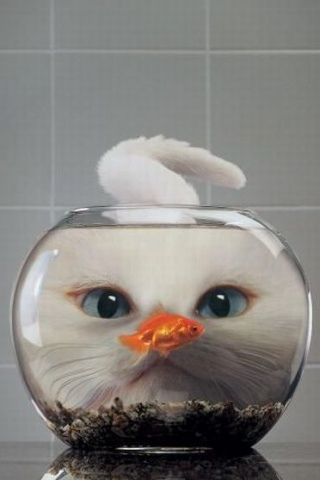 Cat Fishbowl iPod Touch Wallpaper