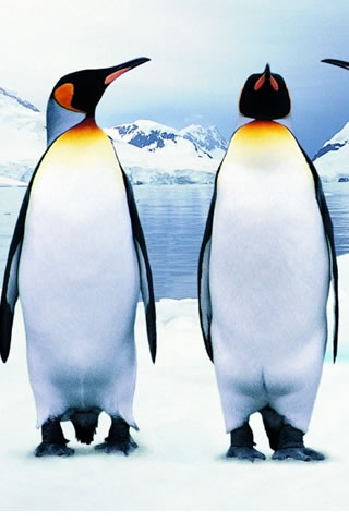 Penguins iPod Touch Wallpaper